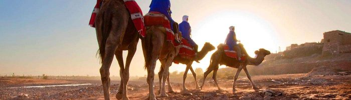 1400-hero-marrakesh-moracco-camels-imgcache-rev1409251938519-web
